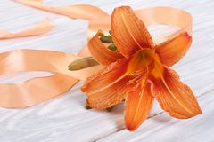 Lily flower with orange ribbon Stock Photo