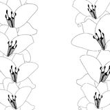 Lily Flower Outline Border isolated on White Background. Vector Illustration.  stock illustration