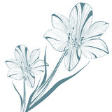 Lily Flower Over White Royalty Free Stock Photography