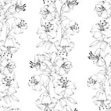 Lily flower pattern Royalty Free Stock Images