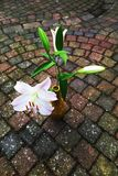 Lily flower on pavement, autumn background Stock Photo