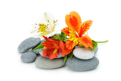 Lily flower and pebble. Royalty Free Stock Photos