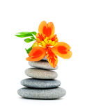 Lily flower and pebble. Royalty Free Stock Image