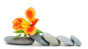 Lily flower and pebble. Stock Image