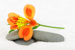 Lily flower and pebble. Stock Photo