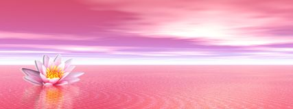 Lily flower in pink ocean stock illustration