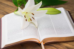 Lily flower resting on open bible Stock Photography