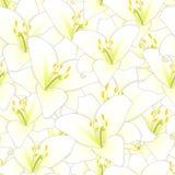 Lily Flower Seamless Background branca Ilustração do vetor ilustração stock