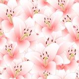 Lily Flower Seamless Background cor-de-rosa Ilustração do vetor ilustração royalty free