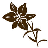 Lily flower silhouette. Vector illustration. Decorative flower icon. Vector lily flower silhouette isolated on white Stock Images
