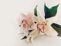 Lily flower vintage made with color filters. Lily flower color vintage made with color filters royalty free stock photo