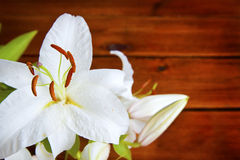 Lily flower on wooden background Stock Photography