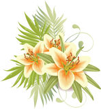 Lily flowers vector illustration