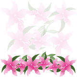 Lily flowers background. isolated white background Stock Photos
