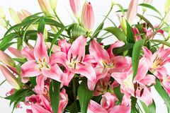 Lily flowers bouquet Stock Image
