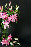Lily flowers bouquet Royalty Free Stock Photos