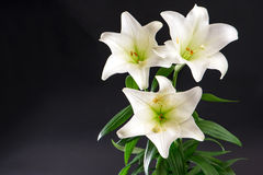 Lily flowers bouquet on black background Royalty Free Stock Photography