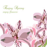 Lily flowers bouquet card Royalty Free Stock Photos