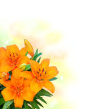 Lily flowers bouquet on white background Royalty Free Stock Image