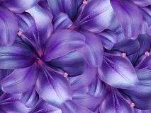 Lily flowers.  bright purple background. floral collage. flower composition. Royalty Free Stock Photos