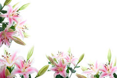 Lily flowers composition frame. Over white copyspace Stock Photos