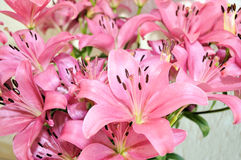 Lily Flowers. Image of a bouquet of Pink Lily Flowers stock photography