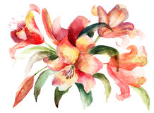 Lily flowers, watercolor illustration. Lily flowers with green leaves, watercolor illustration Royalty Free Stock Photos