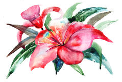 Lily flowers, watercolor illustration Royalty Free Stock Images
