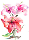 Lily flowers, watercolor illustration. Watercolor illustration of Lily flowers Royalty Free Stock Photo