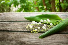 Lily flowers on wooden background Stock Image