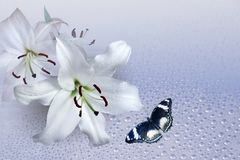 Lily and flying butterfly. On background of the light stock image