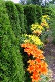 Lily Garden Photo libre de droits