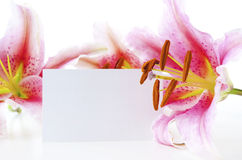 Lily and gift card Stock Photography