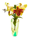 Lily in a glass vase Royalty Free Stock Image