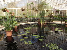 Lily House Arkivfoto