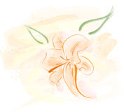Lily illustration. Vector pastel color lily illustration watercolor Royalty Free Stock Photo