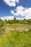 Lily Lake in Karura Forest, Nairobi, Kenya Royalty Free Stock Photography