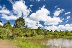 Lily Lake in Karura Forest, Nairobi, Kenya Royalty Free Stock Photo