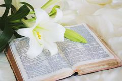 Lily Laying On A Antique Bible On Easter Morning Stock Image