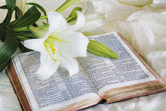 Lily Laying On A Antique Bible On Easter Morning Stock Photo