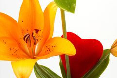 Lily and love Royalty Free Stock Images