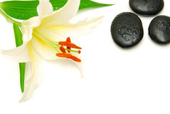 lily and massage stones isolated Royalty Free Stock Images