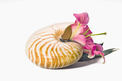 Lily in nautilus shell Royalty Free Stock Photo