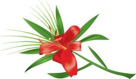 lily odosobnione white Obrazy Royalty Free