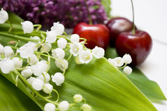 Free Lily-of-the-valley Royalty Free Stock Photos - 14601088