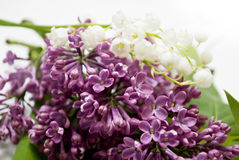 Free Lily-of-the-valley Stock Photos - 14601113