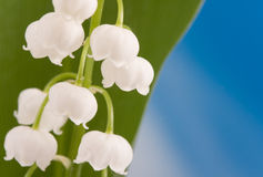 Free Lily Of The Valley Stock Image - 9865051