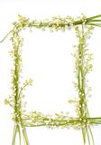 Lily Of The Valley Flowers On Paper Frame Border Isolated Background Stock Photo
