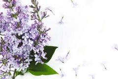 Lily okwitnięcie Bzów kwiatów rama na białym tle Obraz Stock