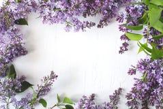 Lily okwitnięcie Bzów kwiatów rama na białym tle Zdjęcia Stock